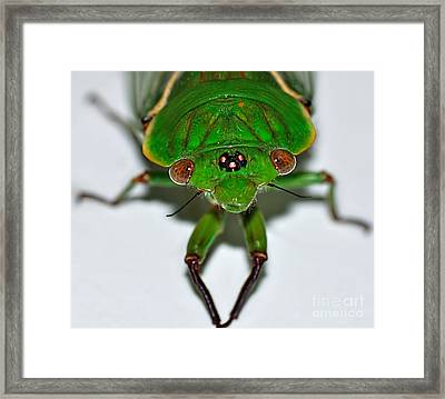 Cicada Eyes Framed Print by Kaye Menner