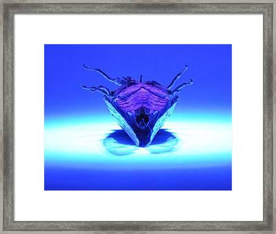 Cicada In Uv Framed Print