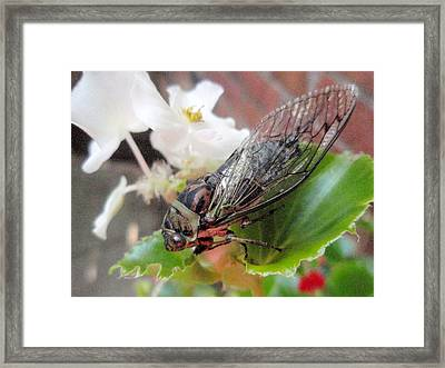 Framed Print featuring the photograph Cicada On Flower by Beth Akerman