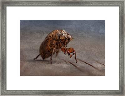 Cicada Shell Framed Print by Tom Mc Nemar