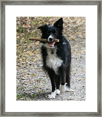Cici With Her Favorite Toy Framed Print by Leslie Hunziker