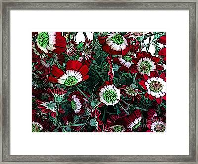 Cineraria - Flowers Framed Print