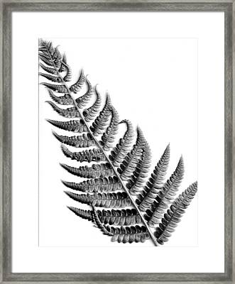 Cinnamon Fern Framed Print by Louis Dallara