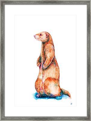 Cinnamon Ferret Framed Print by Zaira Dzhaubaeva