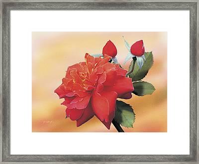 Cinnamon Roses Framed Print by Jan Baughman