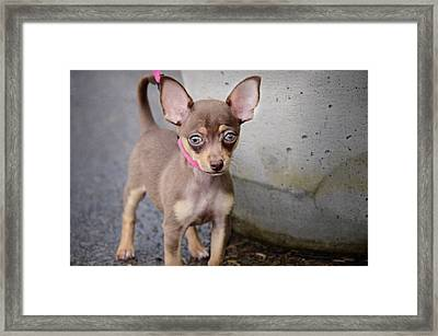 Cinnamon Framed Print by Steven Michael