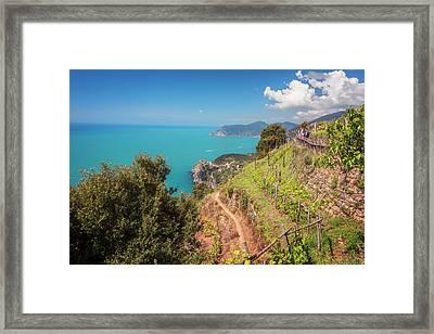 Cinque Terre Italy Vineyard Walk Framed Print