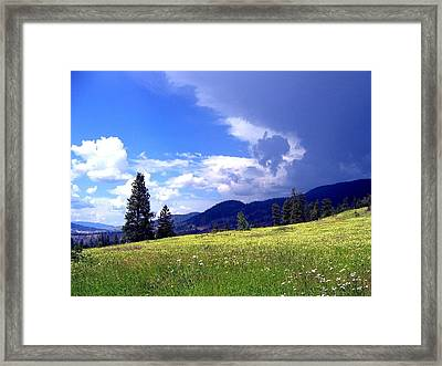 Cinquefoil Blossoms Framed Print by Will Borden