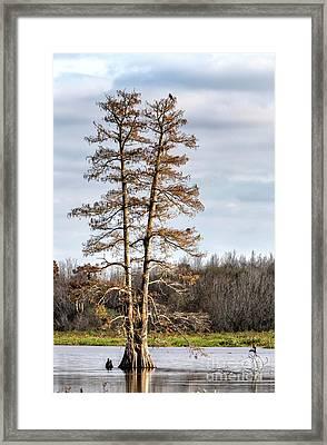 Circle B Bar Reserve, Lakeland, Florida Framed Print by Felix Lai
