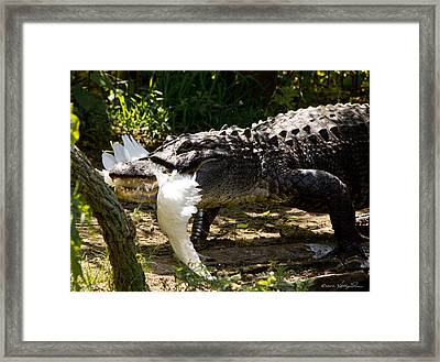 Circle Of Life 2 Framed Print by Kathy Ponce