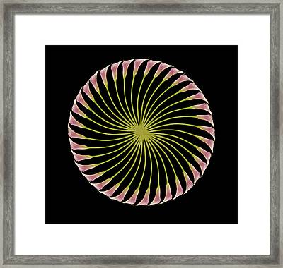 Circle Of Lily Framed Print by Jon Daly