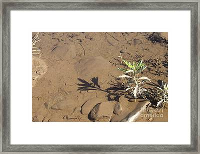 Framed Print featuring the photograph Circle Shadow Plant by Marie Neder