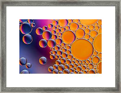 Circlelicious Framed Print by Tim Gainey