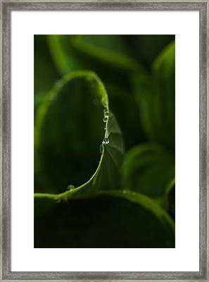 Circles And Drops Framed Print by Karol Livote