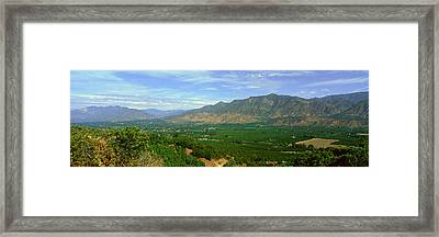 Citrus Trees, Ojai Valley, California Framed Print by Panoramic Images