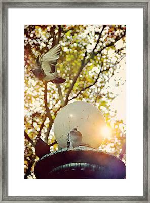 City Doves Framed Print by JAMART Photography