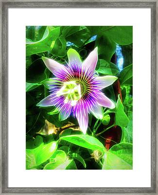City Flare Passion Flower 4 Framed Print