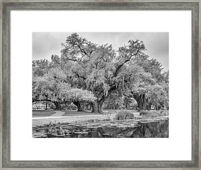 City Park Giants Bw Framed Print by Steve Harrington