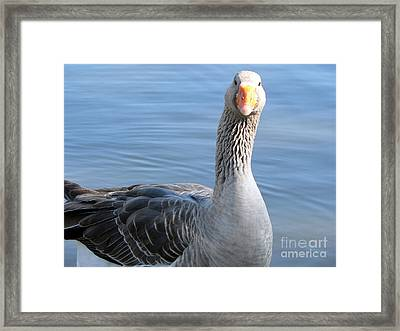 Framed Print featuring the photograph City Park Goose by Elizabeth Fontaine-Barr