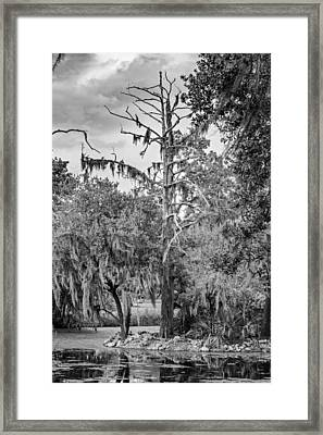 City Park Lagoon - Bw Framed Print by Steve Harrington