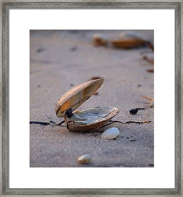 Clam I Framed Print
