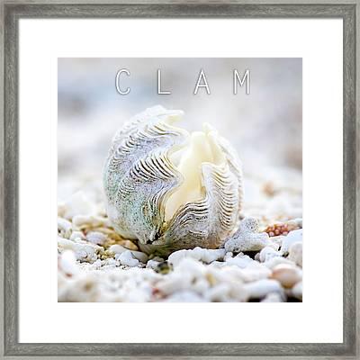 Clam. Framed Print