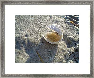 Clam Quarters Framed Print