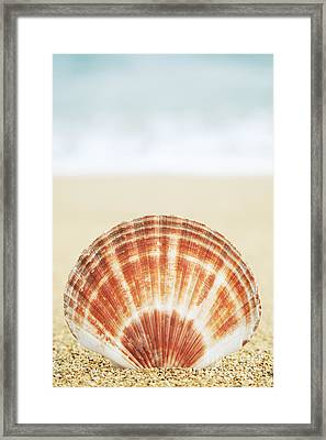 Clam Shell Framed Print by Brandon Tabiolo - Printscapes