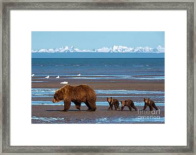 Clamming Trip Framed Print by Aaron Whittemore