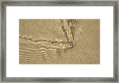 Clams And Ripples Framed Print