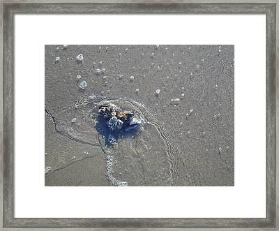Clams At Sea Framed Print by Laurie With