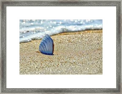 Clamshell In The Waves On Assateague Island Framed Print