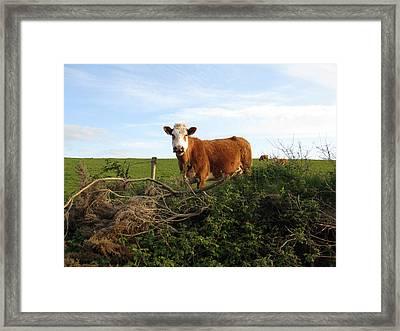 Clare Farm Framed Print