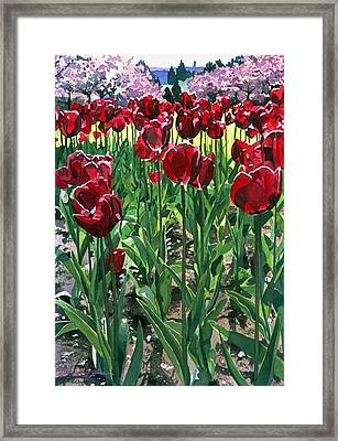 Claret Tulips  Framed Print by David Lloyd Glover