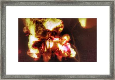 Framed Print featuring the photograph Clarissa by Isabella F Abbie Shores FRSA