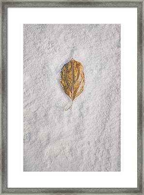 Clash Of Seasons Framed Print by Scott Norris