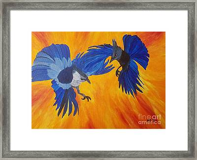 Clash Of Wings Framed Print by Maria Urso