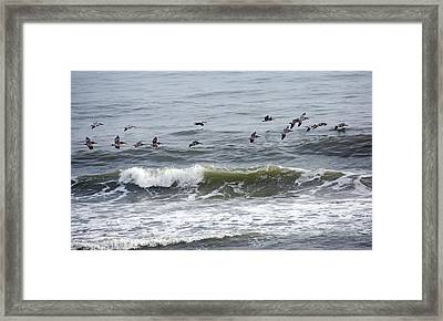 Classic Brown Pelicans Framed Print by Betsy Knapp
