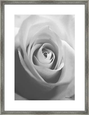 Classic Bw Rose Framed Print