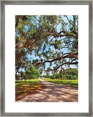 Classic Southern Beauty - Evergreen Plantation Framed Print by Steve Harrington