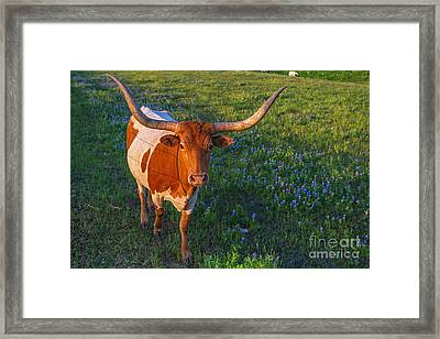 Classic Spring Scene In Texas Framed Print by Gary Holmes