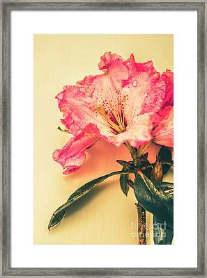 Classical Pastel Flower Clipping Framed Print
