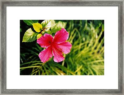 Classical Style Framed Print by Brian Edward Harris