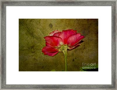 Classy Beauty Framed Print by Claudia Ellis