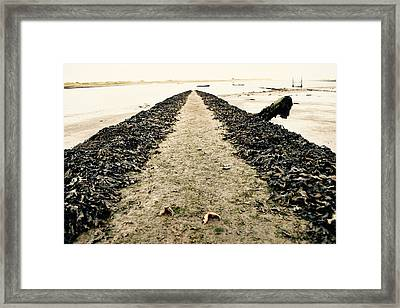 Claws Framed Print by James Fitzpatrick