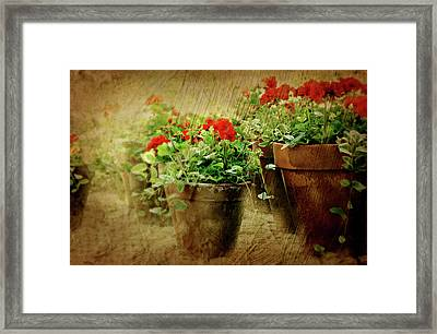Clay Pots Of Geraniums Framed Print by Diana Angstadt