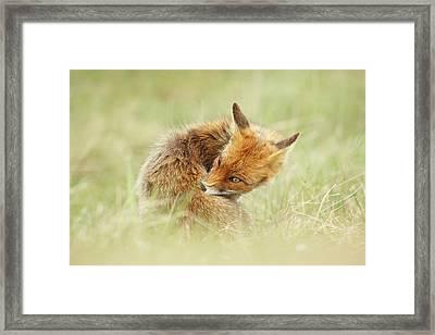 Clean Fox Framed Print by Roeselien Raimond