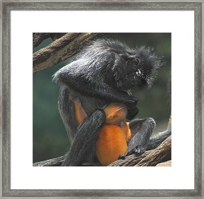 Framed Print featuring the photograph Cleaning Baby by Richard Bryce and Family