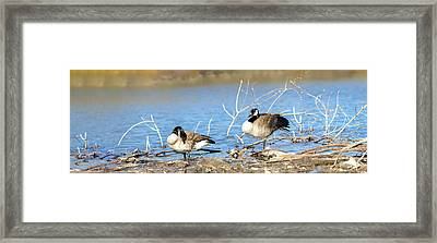Framed Print featuring the photograph Cleaning On Debris by Steven Santamour