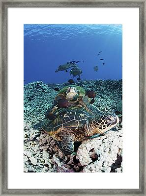 Cleaning Station II Framed Print by Dave Fleetham - Printscapes